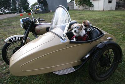 Doggles zon en beschermingbril racing flames