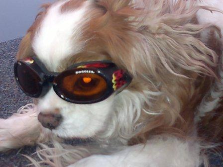 hondenbril van Doggles Racing flame