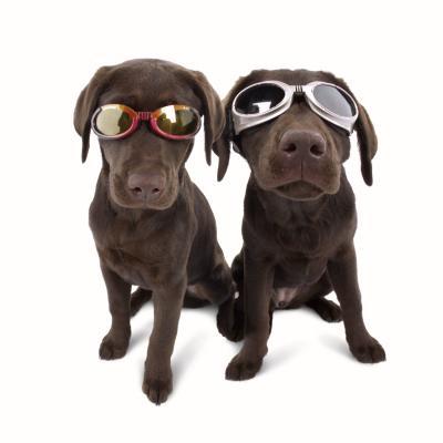 Doggles zon en beschermbril camo