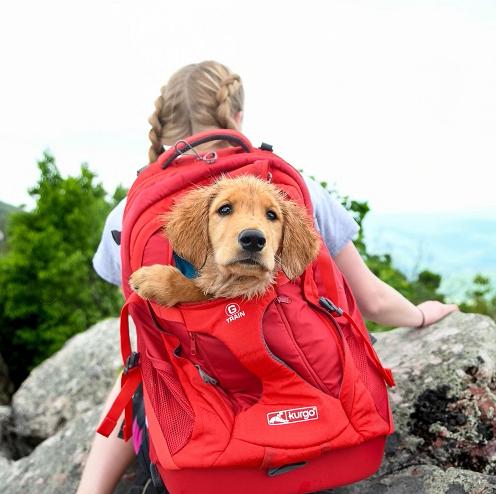 Kurgo rugtas voor kleine honden