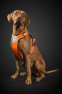 huttra harness orange hond
