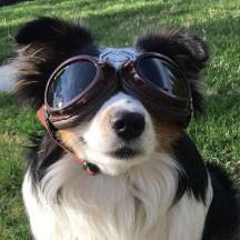 doggles Sidecar