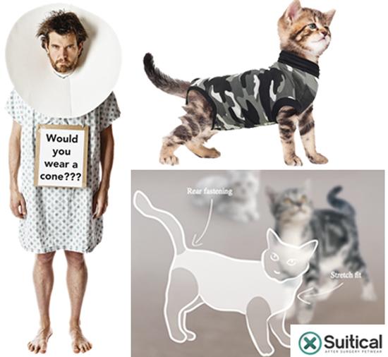 suitical cat