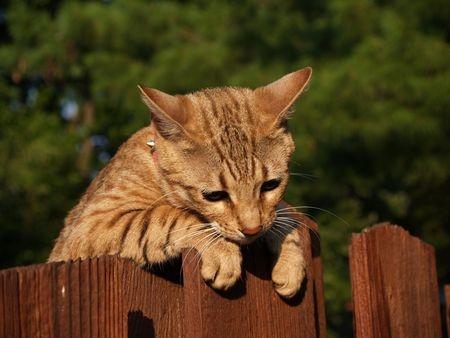 kattenval
