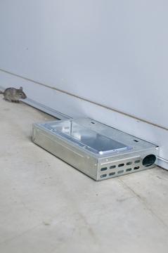 muizenval levend