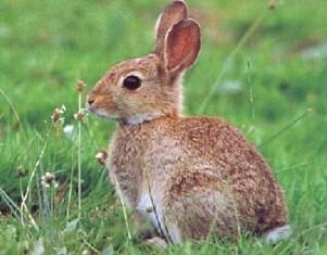 konijnen verjagen